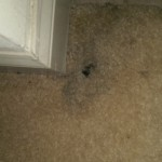 Carpet Cleaning Boynton Beachimage1