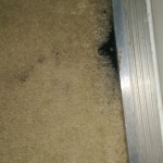Carpet Cleaning Boynton Beachimage2